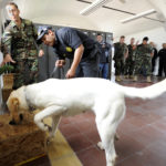 101108-N-8546L-040 MONTEVIDEO, Uruguay (Nov. 9, 2010) Chief Master-at-Arms Nick Estrada, left, a U.S. Navy military working dog handler from Orange, Calif., rewards a Uruguayan police narcotics sniffing dog after correctly tracking simulated narcotics during a three-week training course coordinated by the Maritime Civil Affairs and Security Training Command (MCAST). MCAST delivers teams of highly skilled Sailors to share expertise with partner nations to strengthen international relationships. (U.S. Navy photo by Mass Communication Specialist 1st Class Peter D. Lawlor/Released)